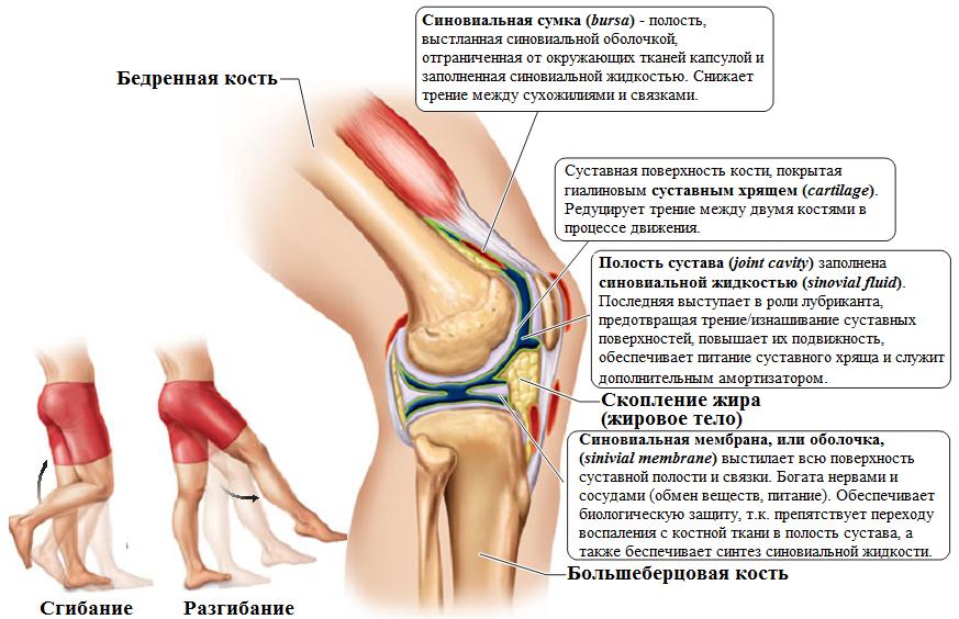 усиление болей в коленном суставе